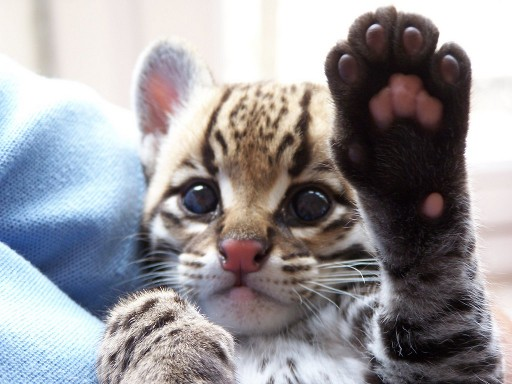 Le plus mignon des High Five